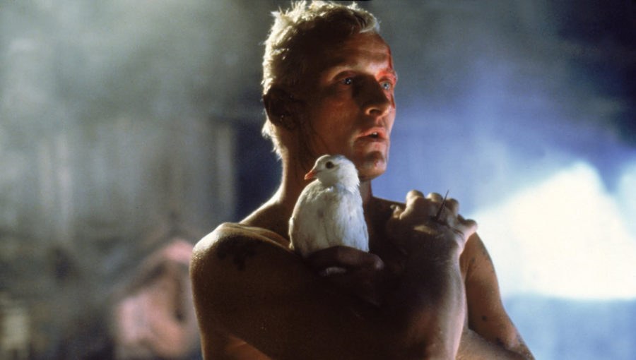 Le Nexus 6 Roy Batty et sa colombe dans le film Blade Runner de Ridley Scott (1982).